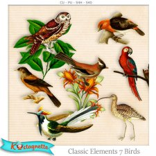 Classic Elements 7 Birds by Kastagnette