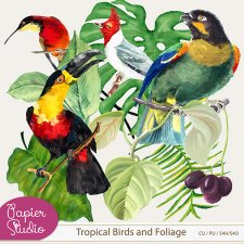 Tropical Birds and Foliage by PapierStudio Silke