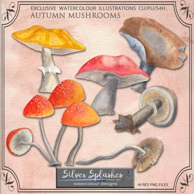 EXCLUSIVE Autumn Mushrooms Watercolour by Silver Splashes