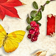 Vol. 0073 Autumn Nature Mix by Doudou Design