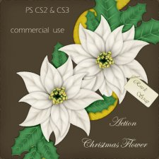Action - Christmas Flower by Rose.li