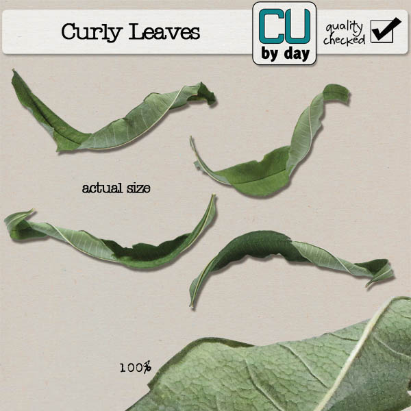 Curly Leaf - CUbyDay EXCLUSIVE