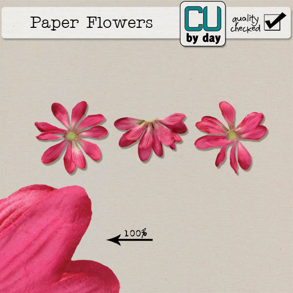 Paper Flowers - CUbyDay EXCLUSIVE