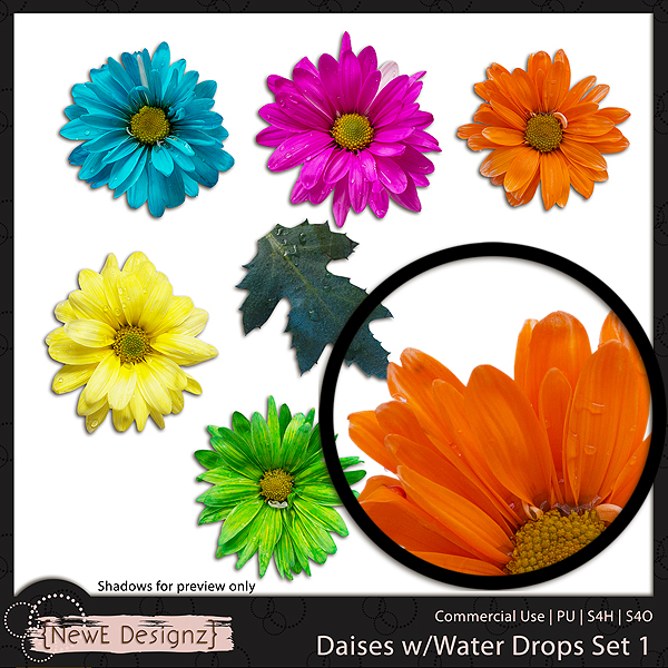 EXCLUSIVE Daises with Water Drops Set 1 by NewE Designz