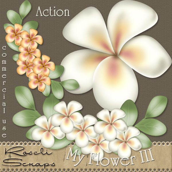 Action - My Flower III by Rose.li